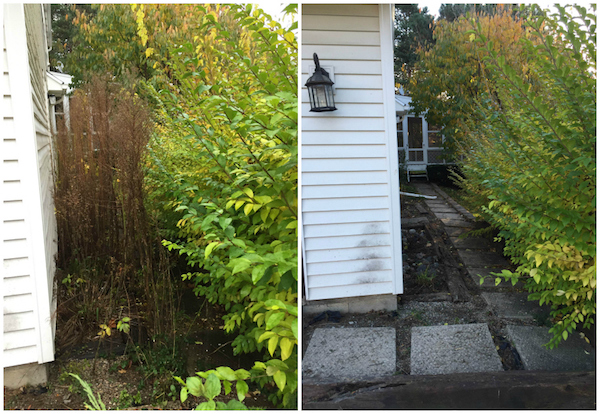 WEEDING & SHRUB REMOVAL from Rachel Schultz