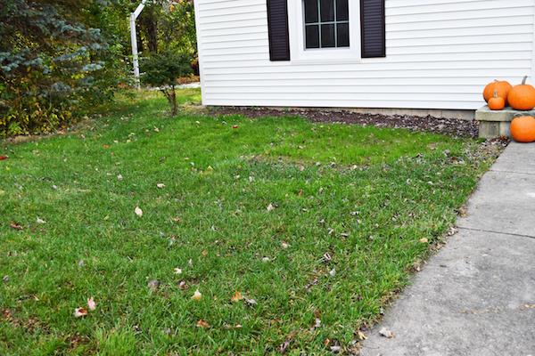 planting-grass-seed-copy-2