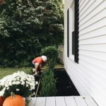 PLANTING A ROW OF BOXWOODS